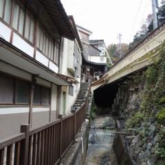 arifuku1